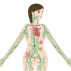 Woman Lymphatic Illustration Half Body